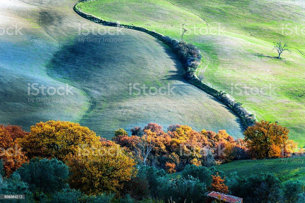 Tree on the hill,autumn,oak,olive grove,Tuscany,Italy stock photo