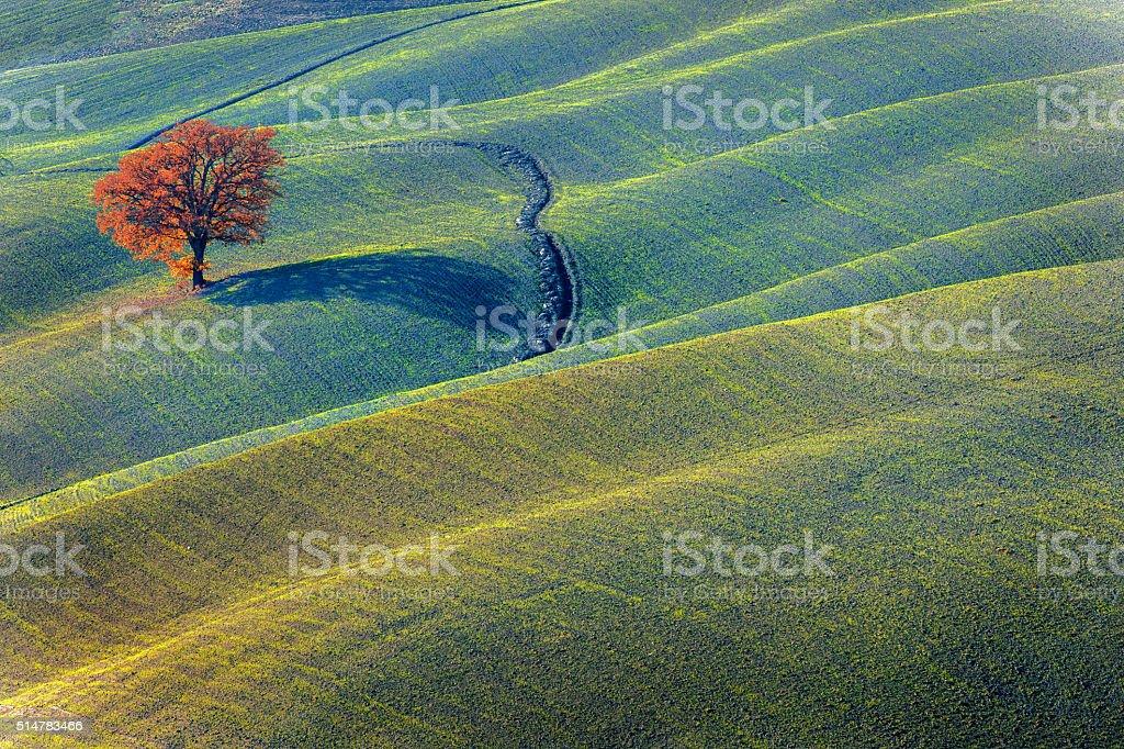 Tree on the hill,autumn,oak,Tuscany,Italy stock photo