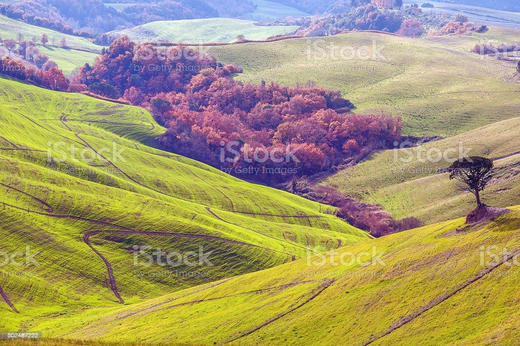 Tree on the hill,oak, pinija,line,Volterra,Tuscany,Italy stock photo