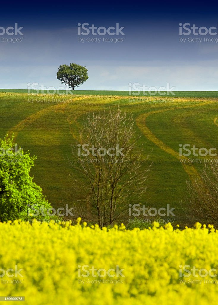 Tree on the horizon in Spring royalty-free stock photo