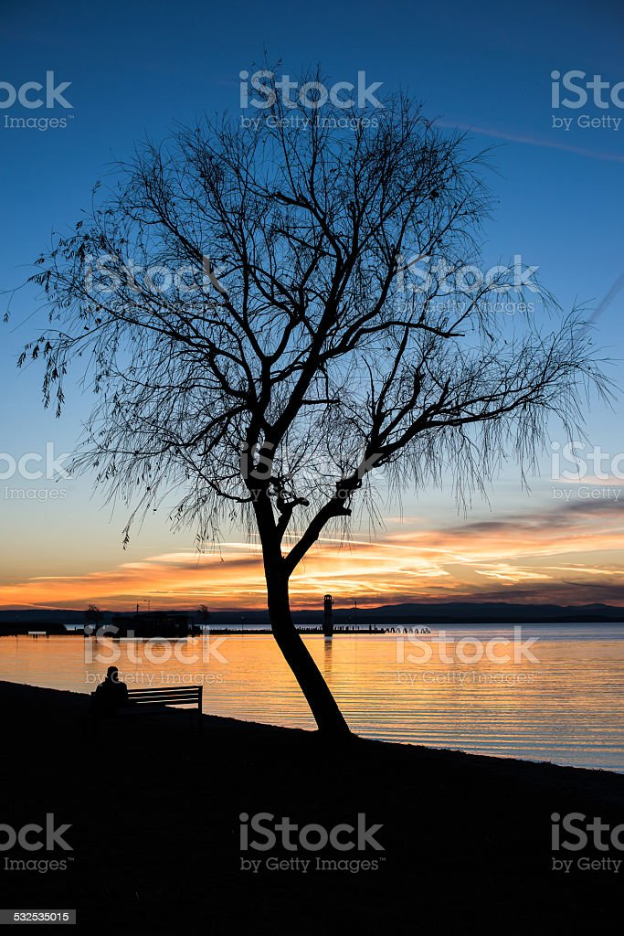 Tree on the lake shore by sunset stock photo