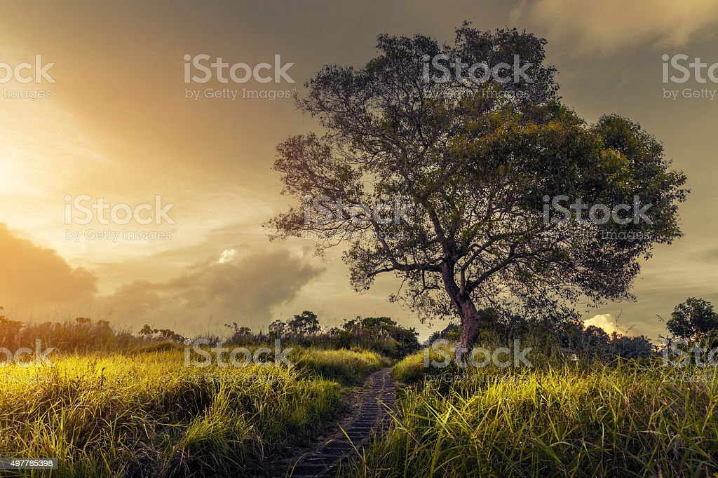Tree on the meadow stock photo
