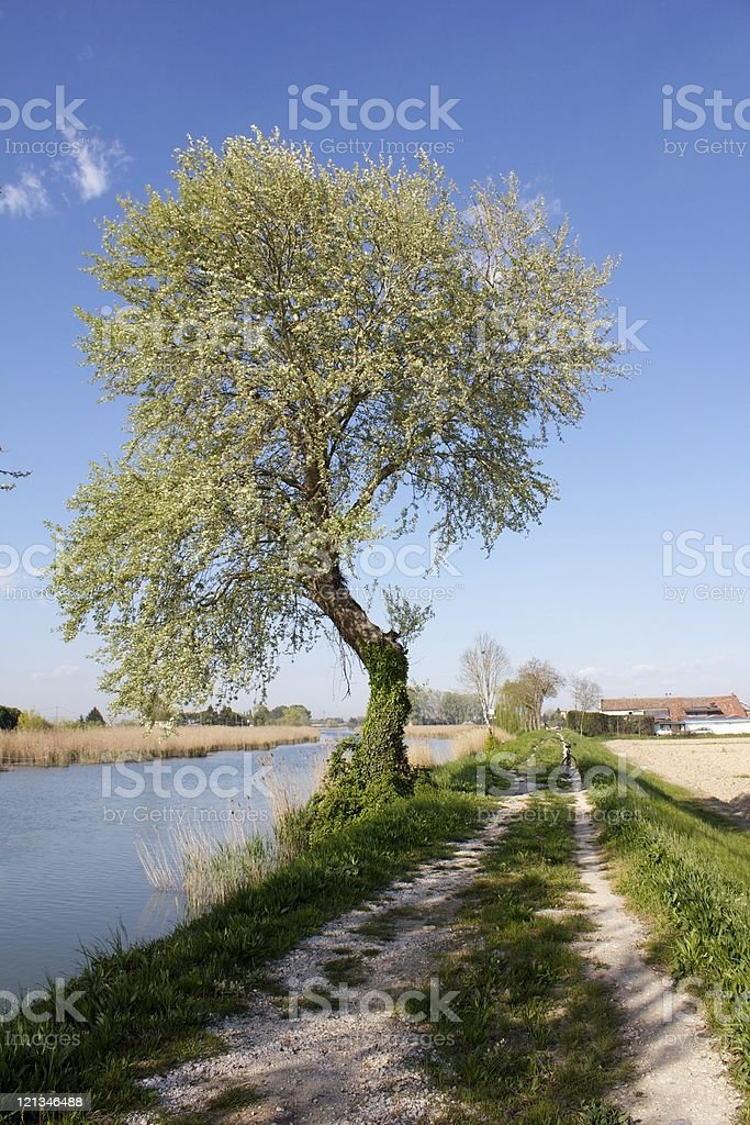 Tree on the river royalty-free stock photo