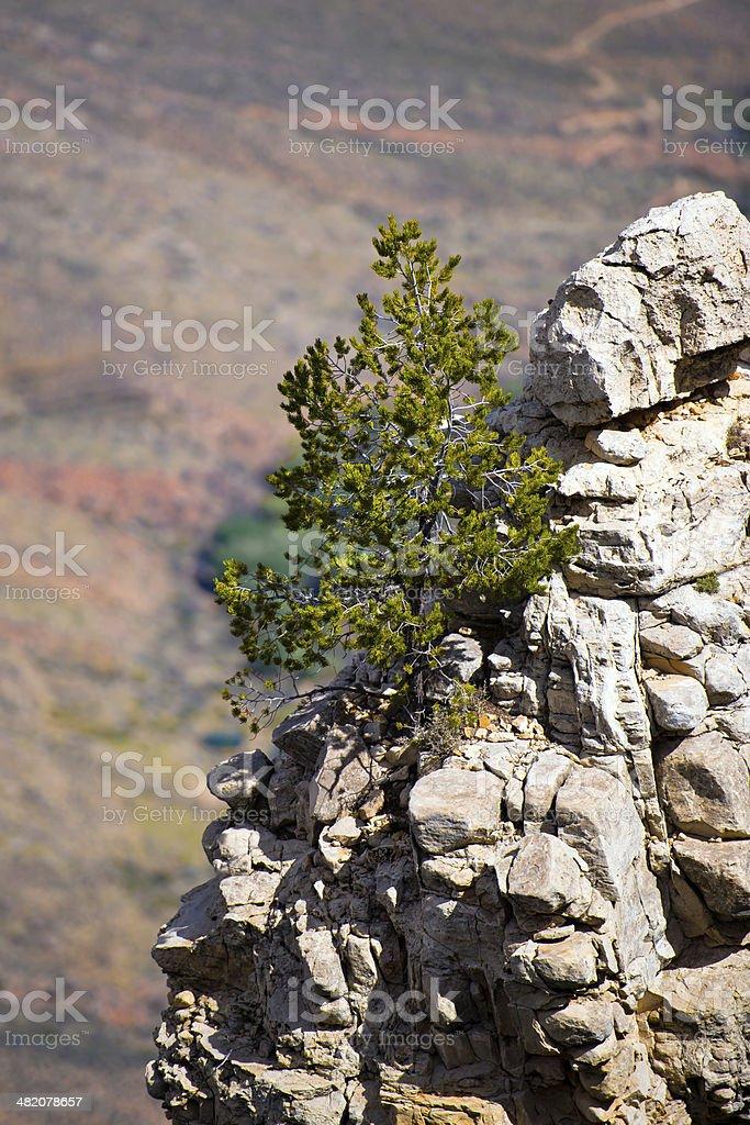 Albero del rock parapetto del Grand Canyon foto stock royalty-free