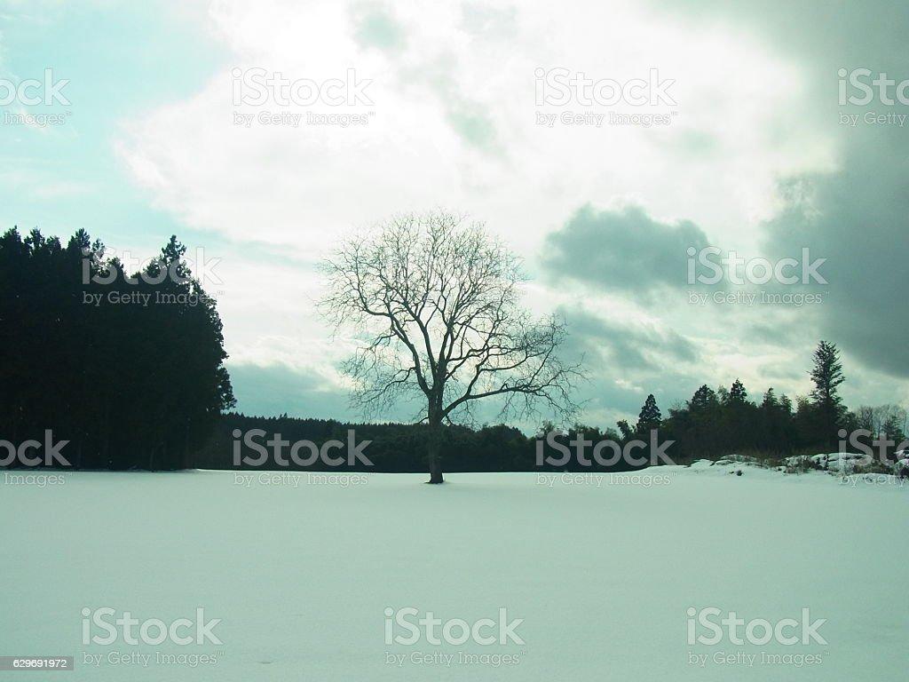 tree on the snow stock photo