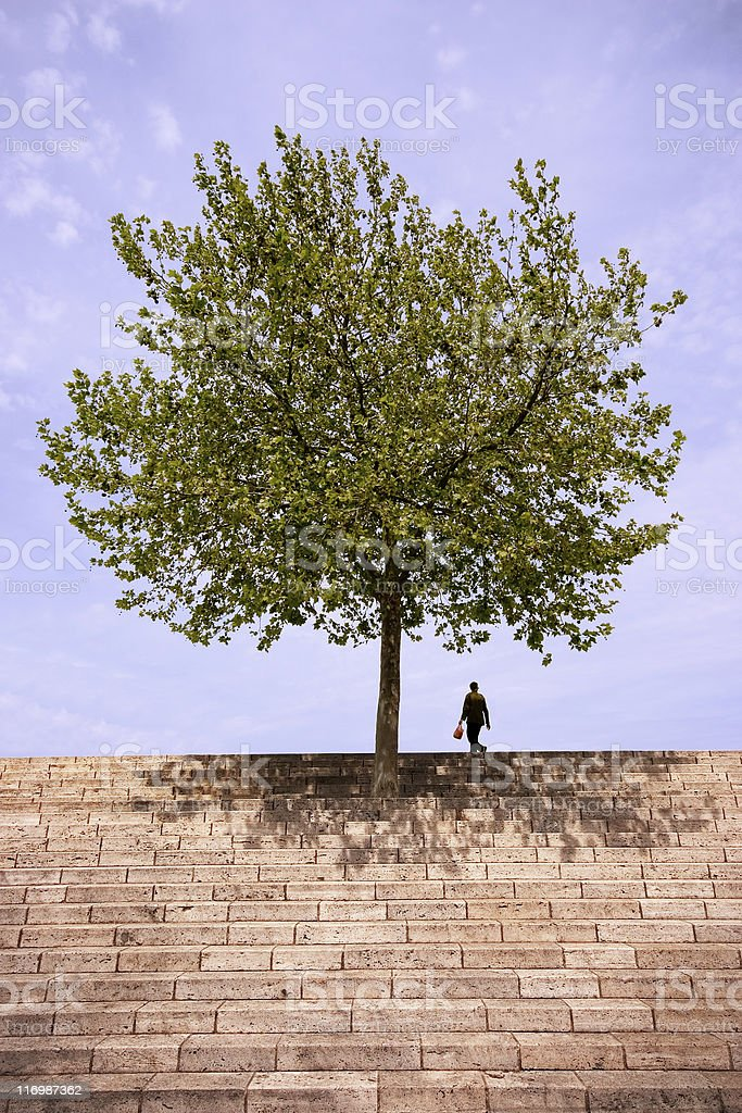 Tree on the top of stairs stock photo