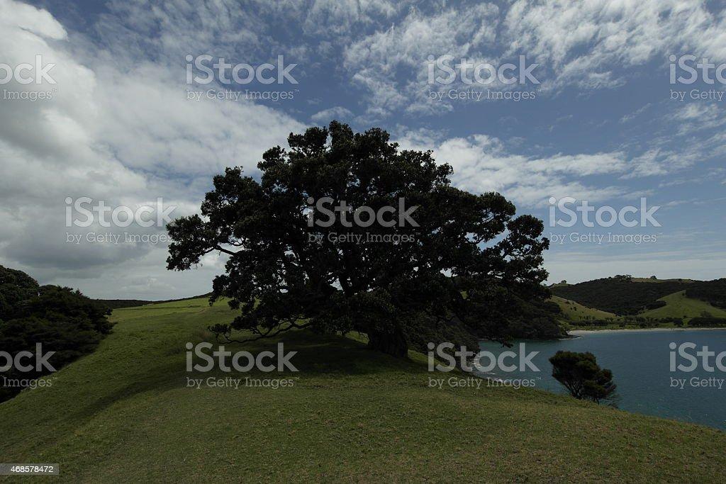 Tree on the Urupukapuka Island stock photo