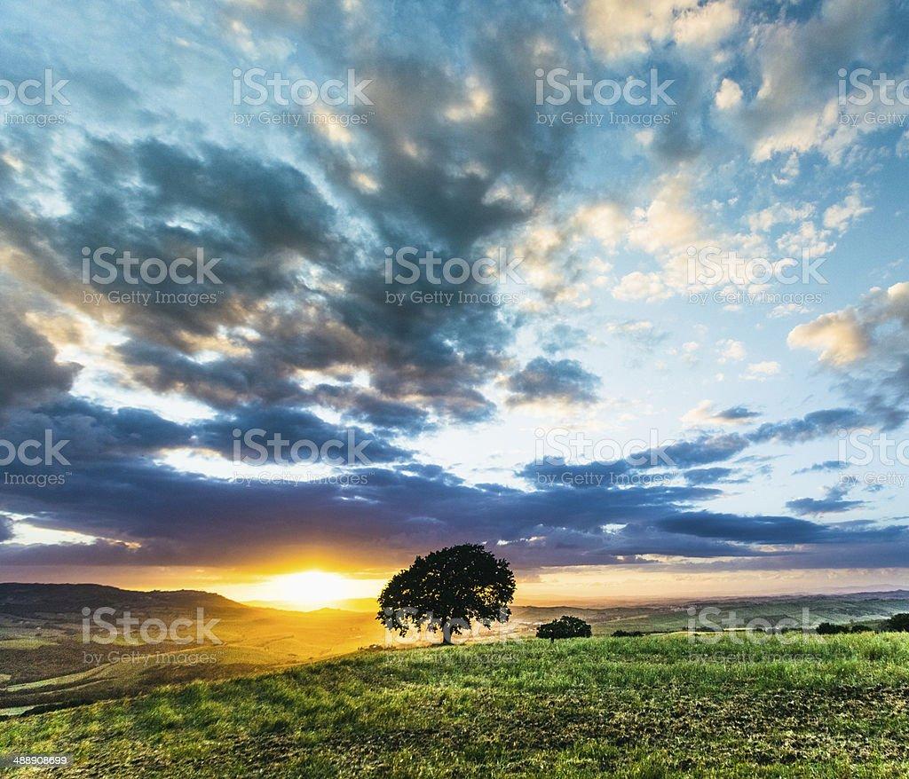 Tree on Tuscan hills royalty-free stock photo