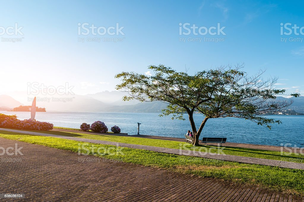Tree on water background. stock photo