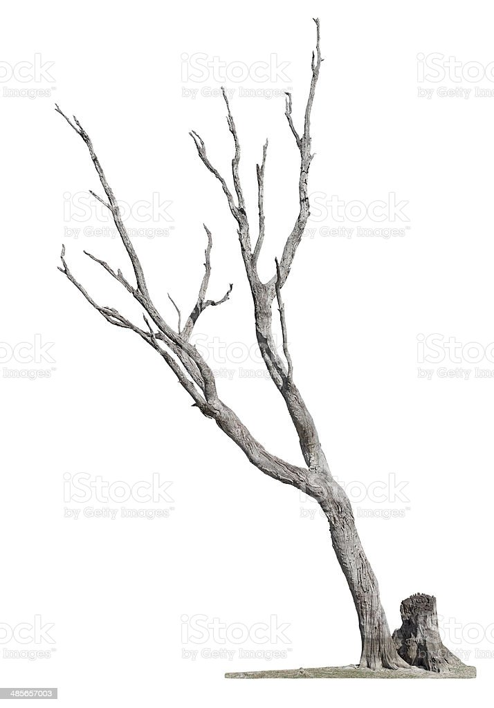 Tree on white background stock photo