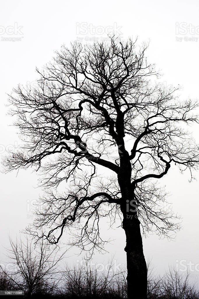 Tree outline royalty-free stock photo