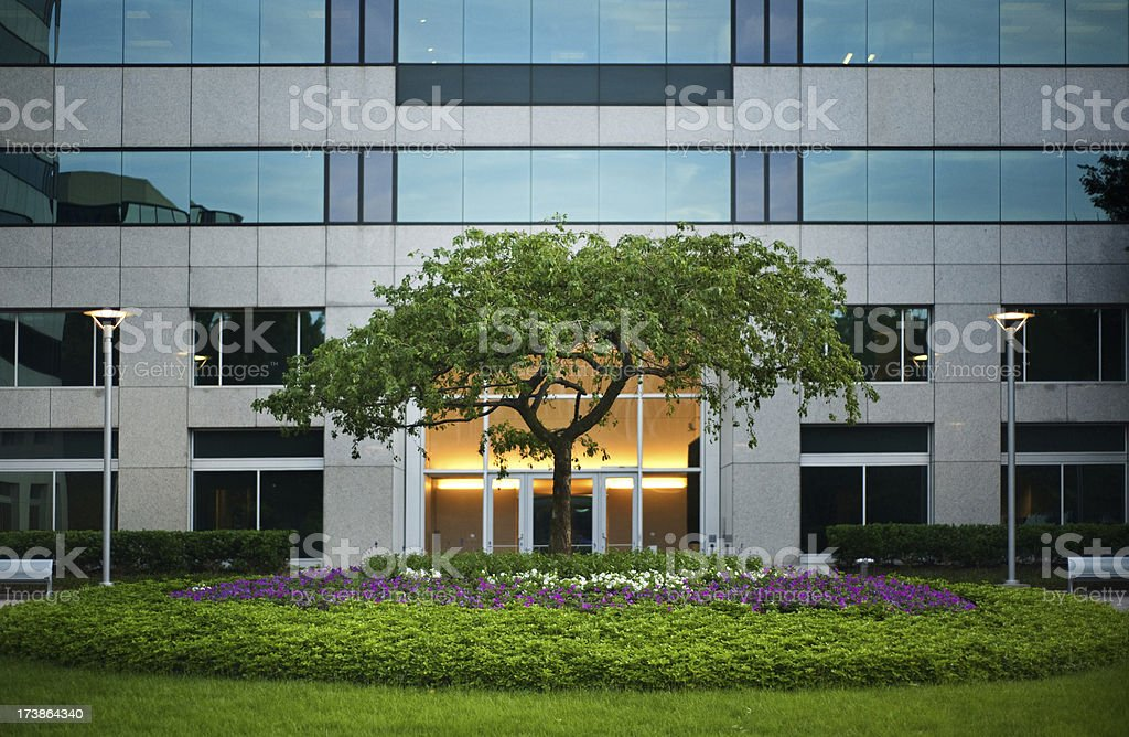 Tree outside office building stock photo