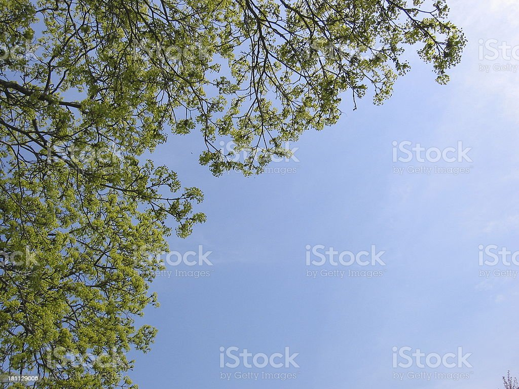 Tree - Overhanging royalty-free stock photo