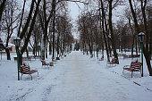tree, Park, winter, background
