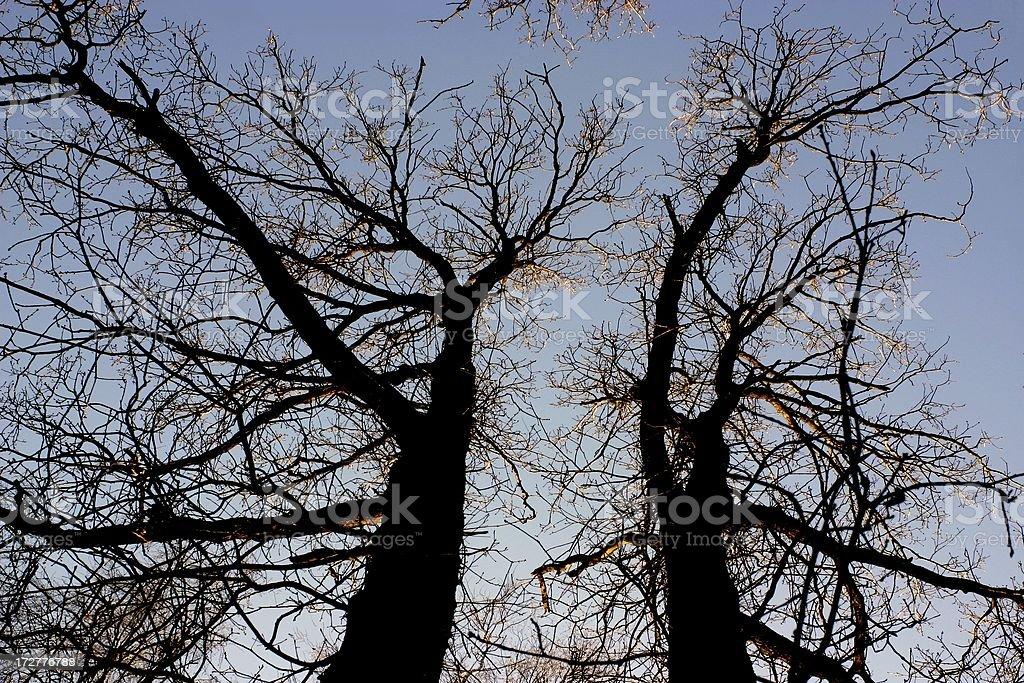 tree partnership royalty-free stock photo
