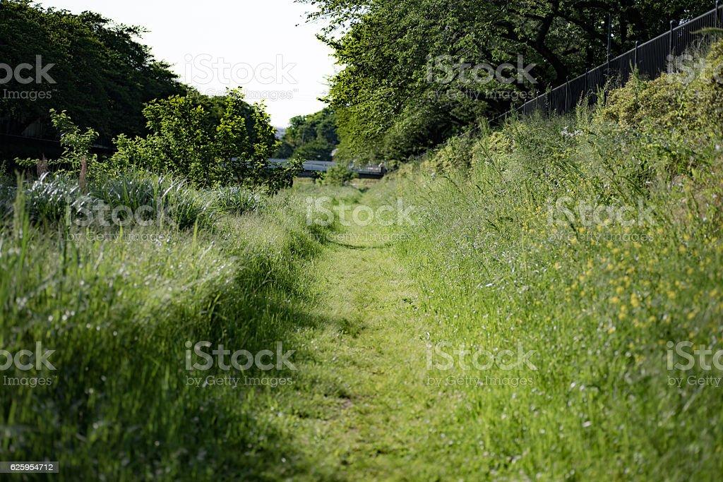 Tree, path, road, lane stock photo