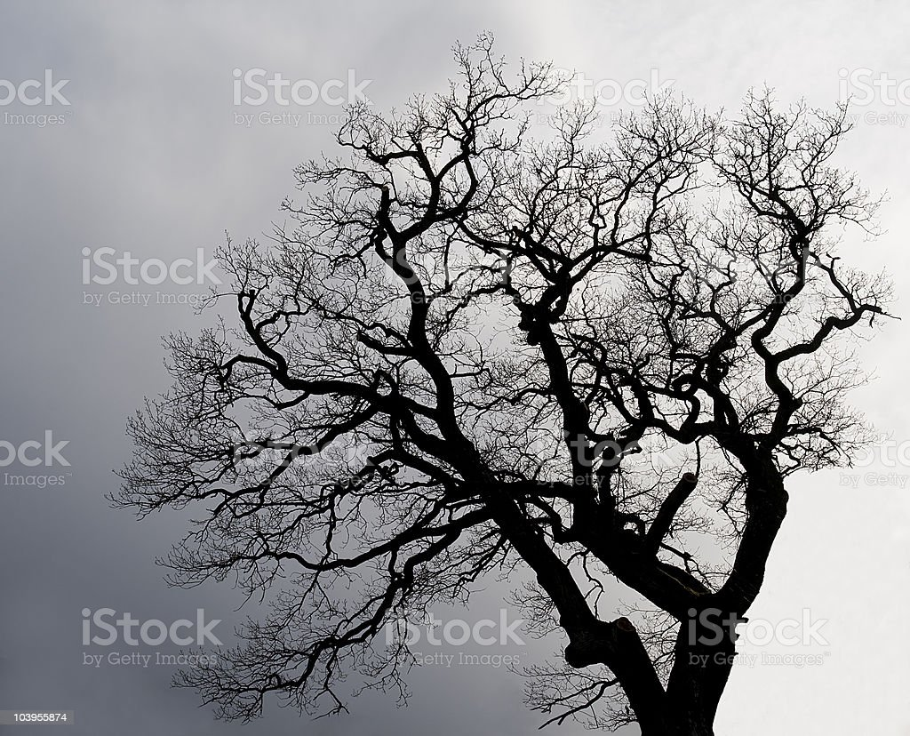 Tree. stock photo