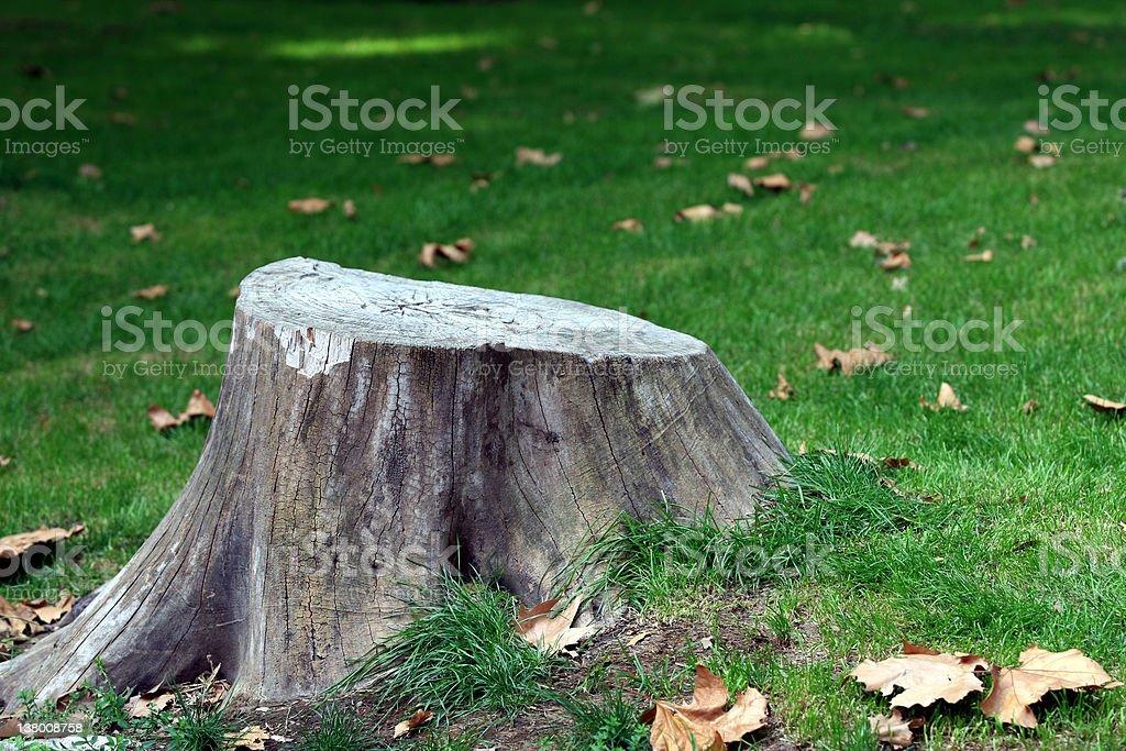 Tree stock photo