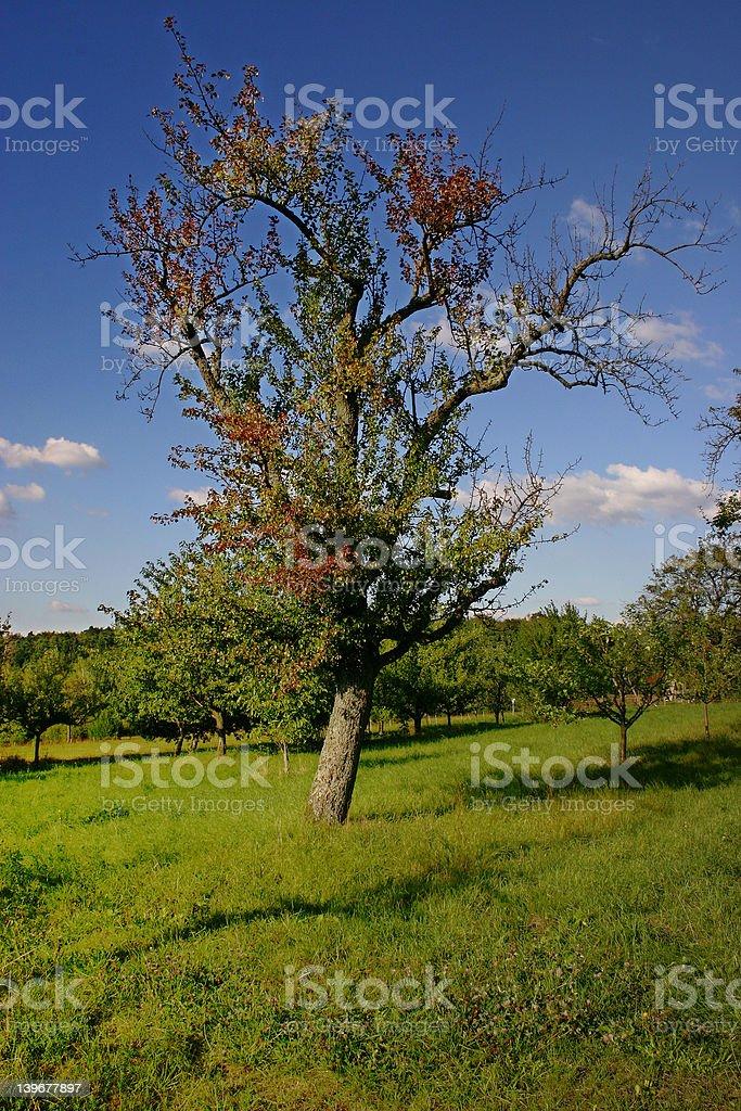 のツリー ロイヤリティフリーストックフォト