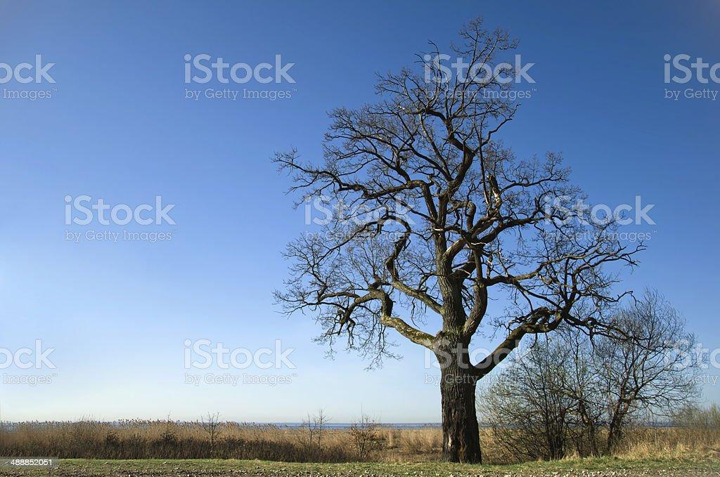 Árvore foto de stock royalty-free