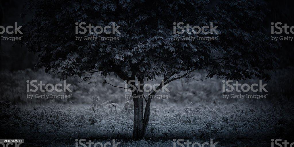 tree . stock photo