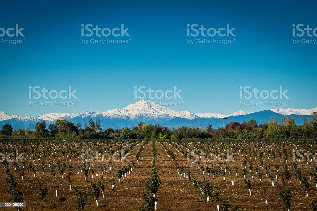 Tree Plantation stock photo