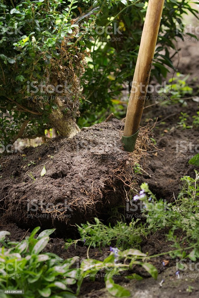 Tree Planting stock photo