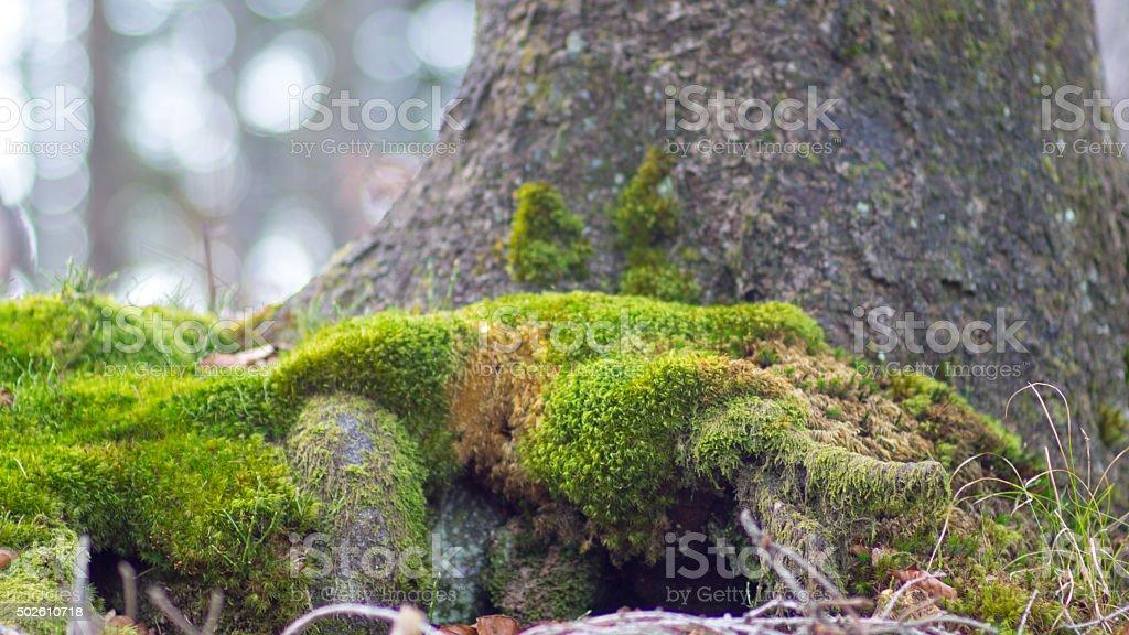 Tree portrait stock photo