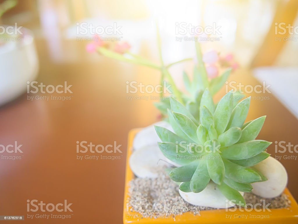 tree pot on table with sun light stock photo