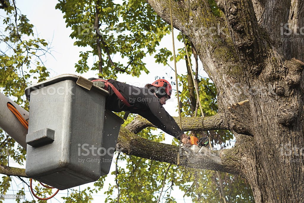Tree Pruning Service Arborist Trimming Branches with Chainsaw Horizontal stock photo