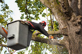 Tree Pruning Service Arborist Trimming Branches with Chainsaw Horizontal