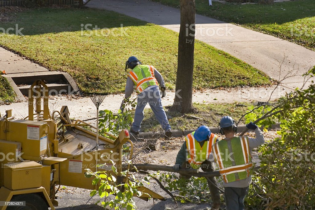 Tree Pruning Service with Wood Chipper and Workers on Street stock photo