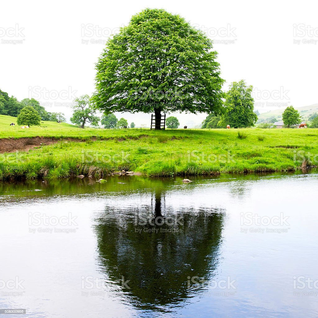 Tree reflected in River Hodder stock photo