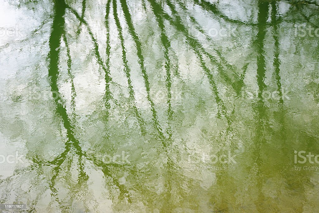 tree reflected in water ripples during a rain shower stock photo