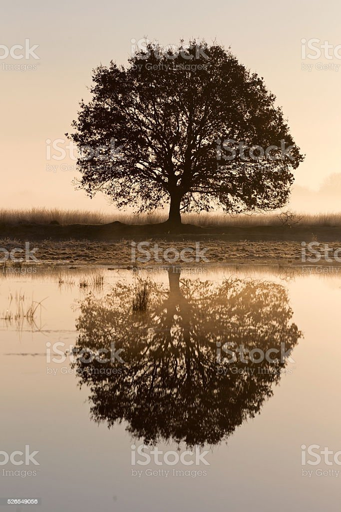 Tree reflecting in the water in the morning light stock photo