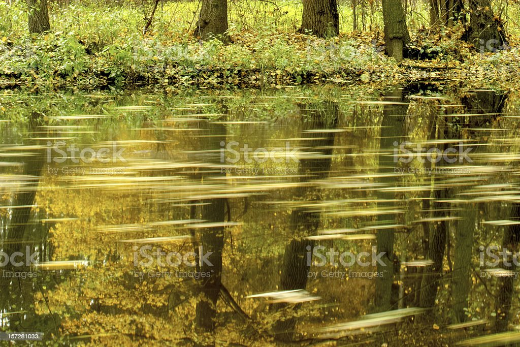 Tree Reflection and Floating Leaves royalty-free stock photo