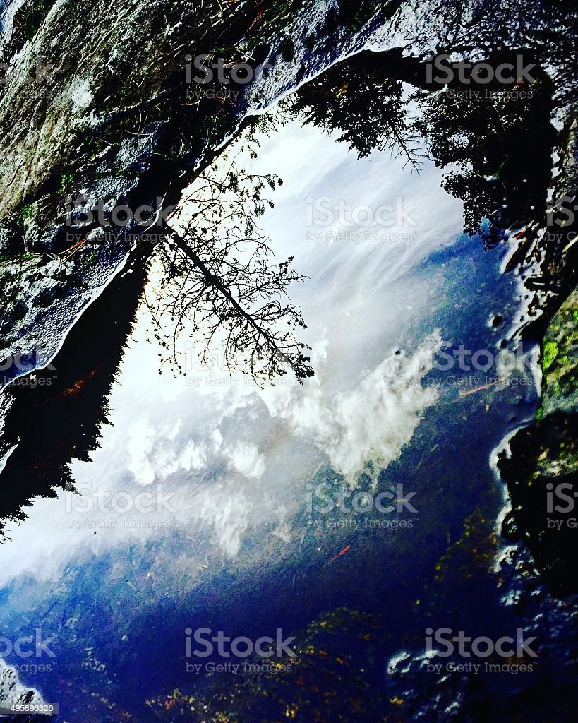 Tree reflection in puddle royalty-free stock photo
