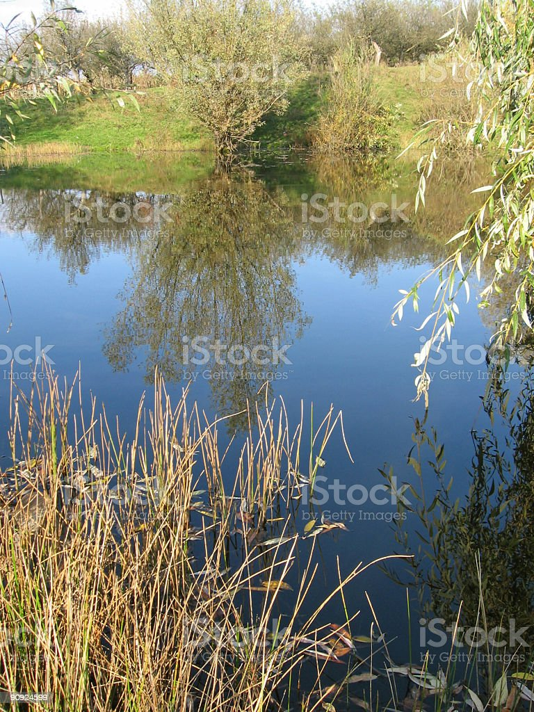 Tree reflection in the lake 2 royalty-free stock photo