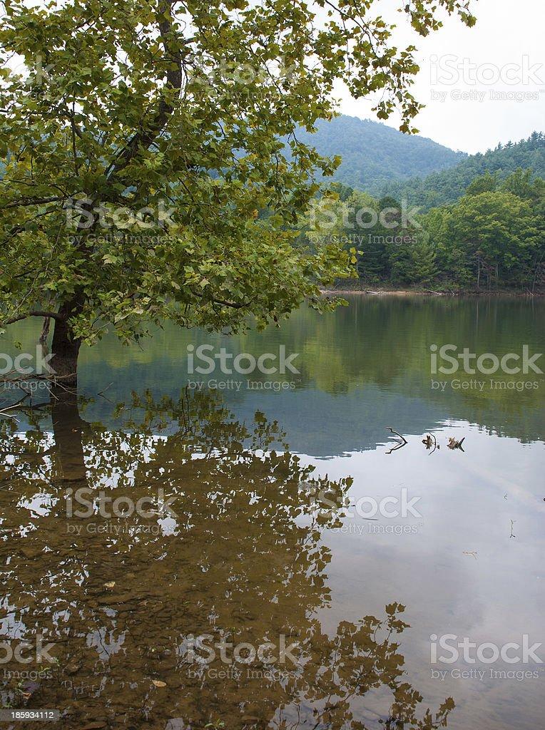 Tree Reflection on Watauga Lake royalty-free stock photo