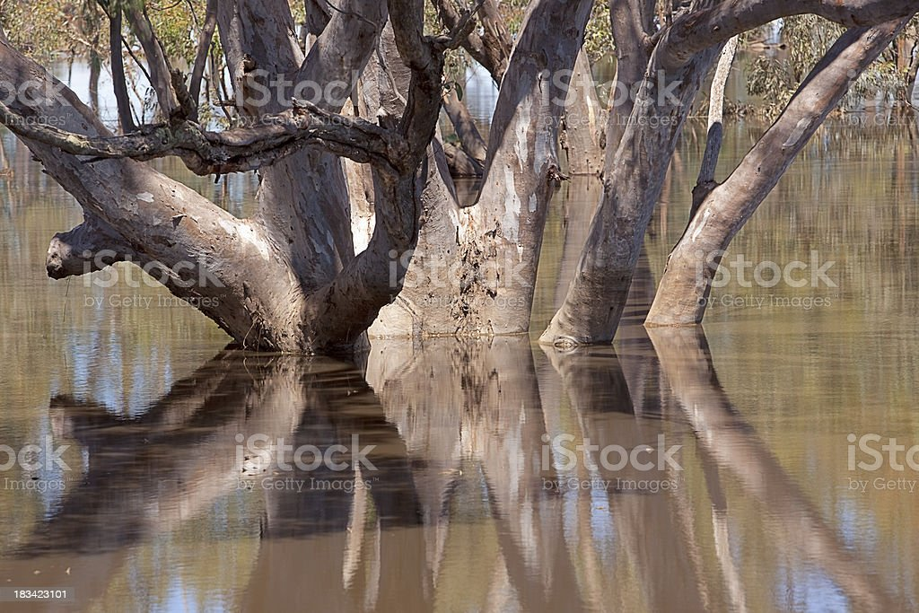 Tree reflections in floodwaters stock photo