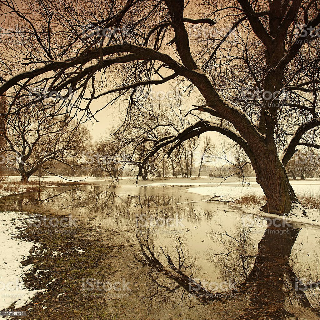 tree reflections royalty-free stock photo