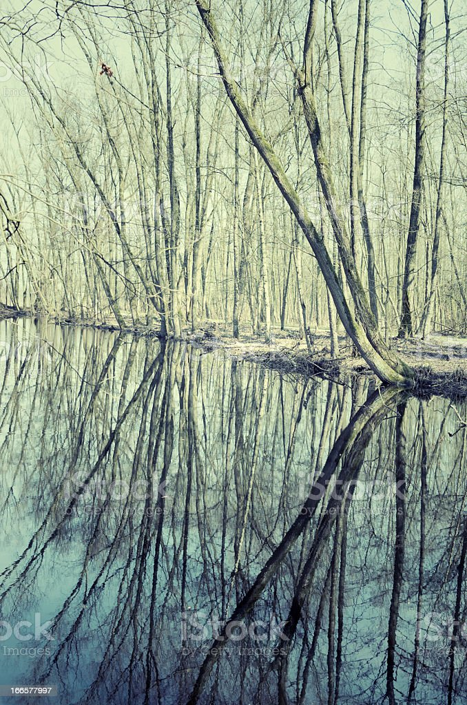 Tree reflections royalty-free stock photo