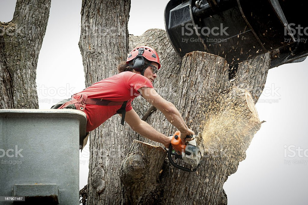 Tree Removal Arborist Working on Trunk with Heavy Equipment royalty-free stock photo