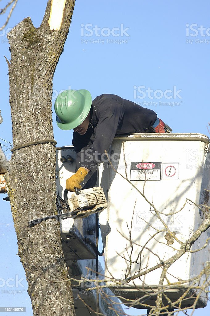 Tree Removal royalty-free stock photo