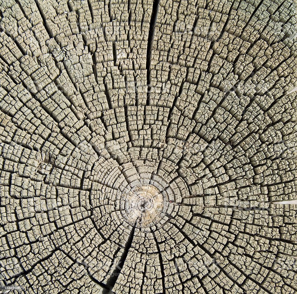 Tree Ring Trunk Wood Crossection royalty-free stock photo