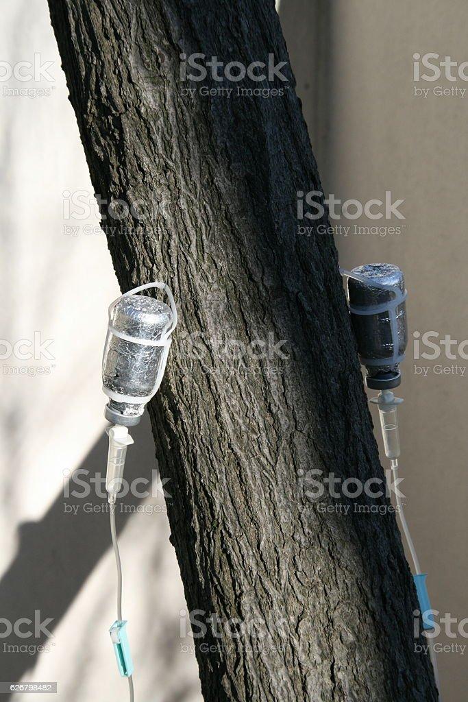 tree ringer stock photo