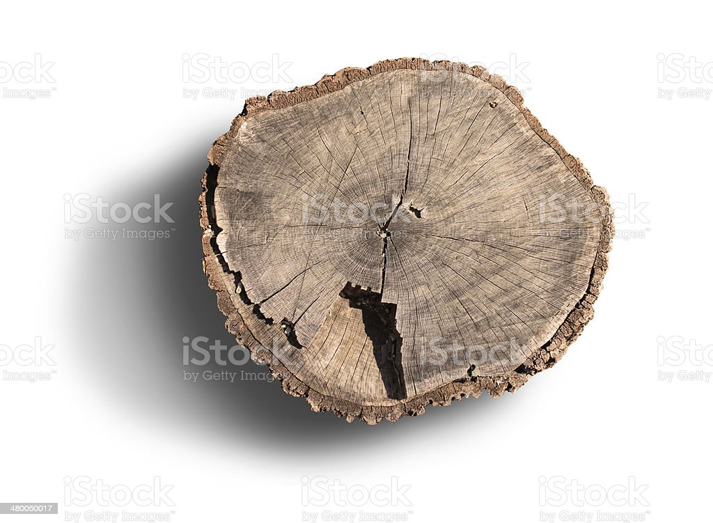 Tree rings on an isolated stump stock photo