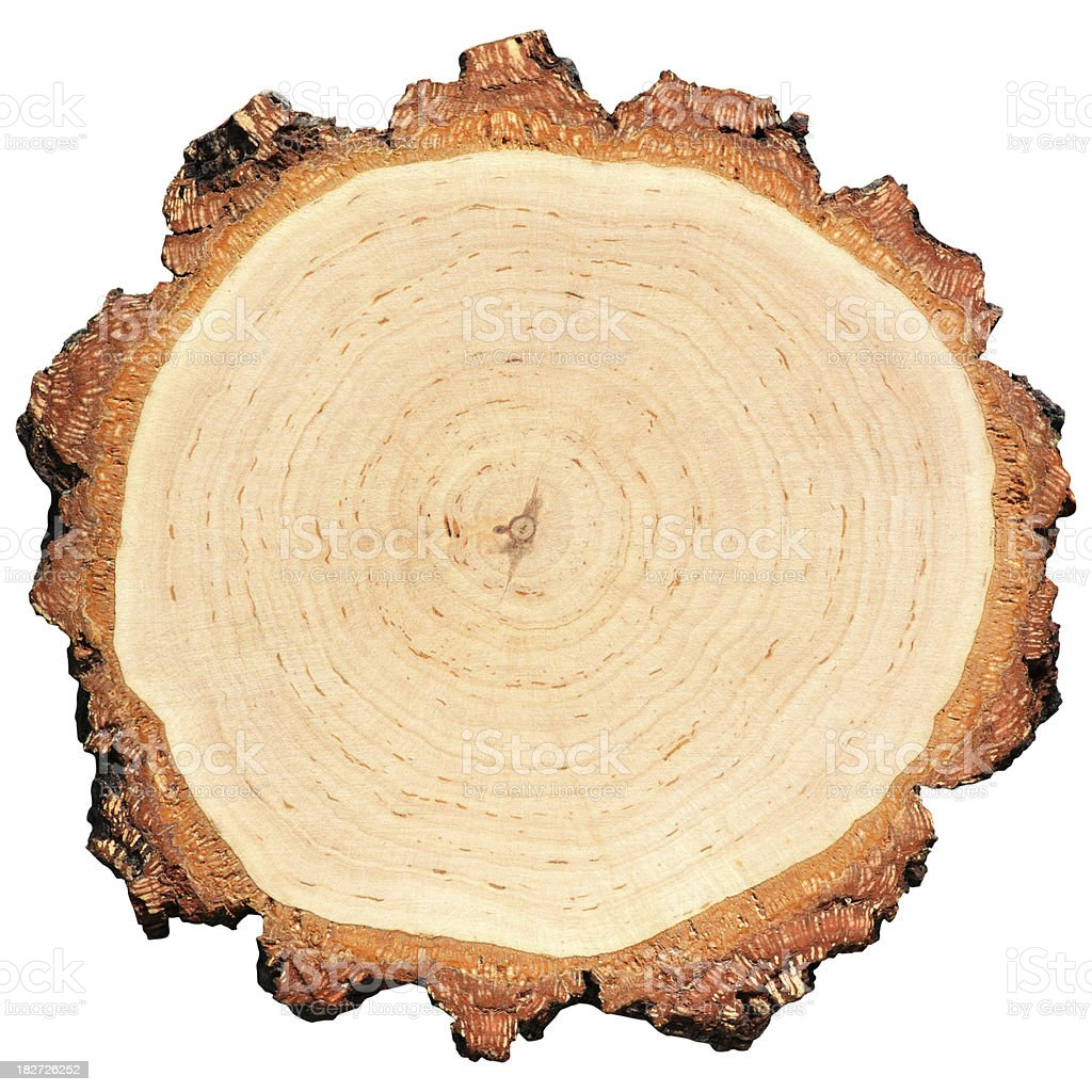 Tree Rings royalty-free stock photo