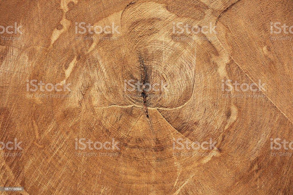 Tree Rings royalty-free stock photo