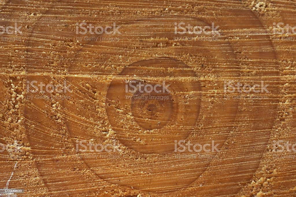 Tree rings Nature's calendar stock photo